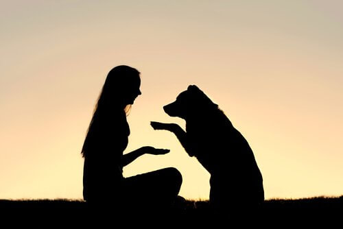 Pozitif Köpek Eğitimi Nedir?