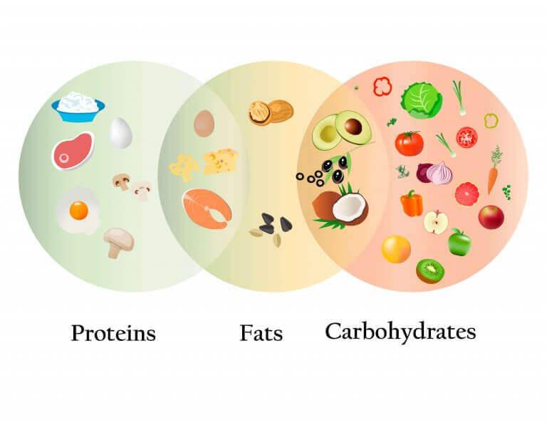 protein yağ ve karbonhidratlar