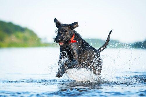 En Sportif Köpek Irkları