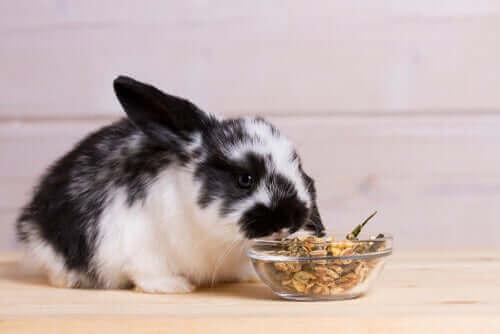 tavşanlar nasıl beslenir?