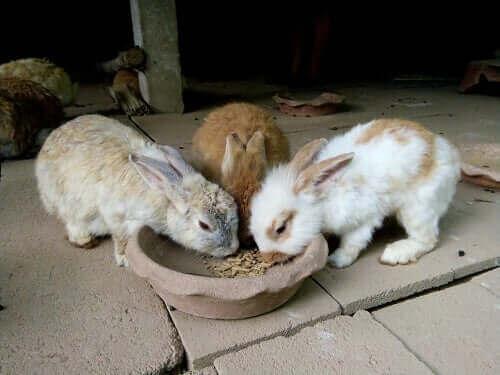 Tavşanlar Ne Kadar ve Ne Zaman Yemeli?
