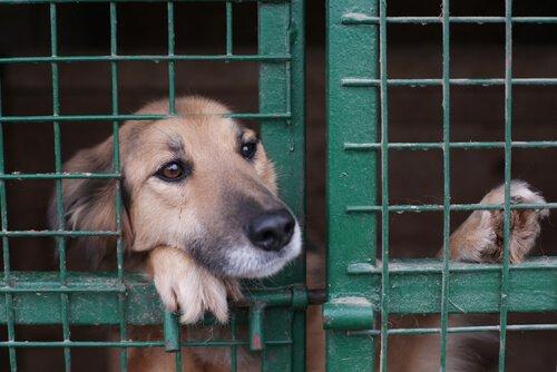 Hayvan Barınakları: Hayvanları Terk Etmeyin!