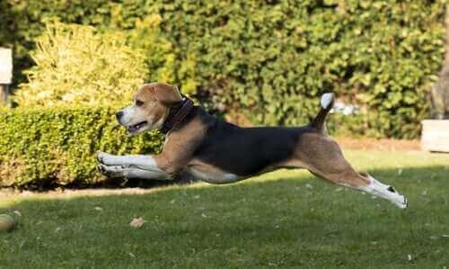 Hayvan Osteopatisi: Nedir Ve Nasıl İşe Yarar?