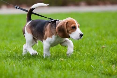 Bölgenizde Köpek Gezdirme Kuralları