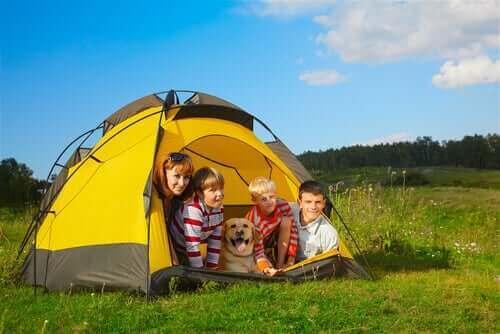 Çocuklar ve Köpeklerle Kamp Yapmak – Yasal Yönleri