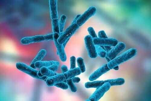 Bifidobakteriyum bağırsak florası içerisinde önemli bir yere sahip.