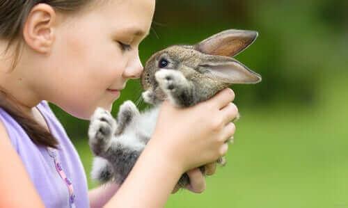 En İyi Evcil Tavşan Irkları