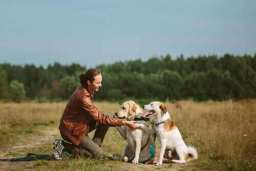 Tasmasız Köpekler – Yerel ve Eyalet Kuralları