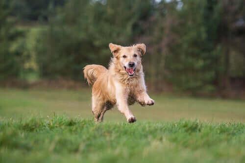 İpi bağsız köpek