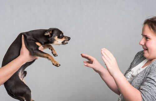 agresiflik yapan köpek