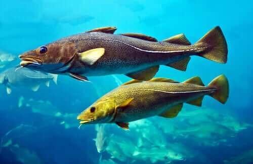 yüzen balıklar