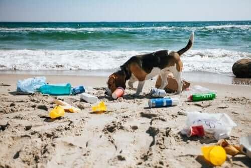 sahildeki çöplerle oynayan köpek