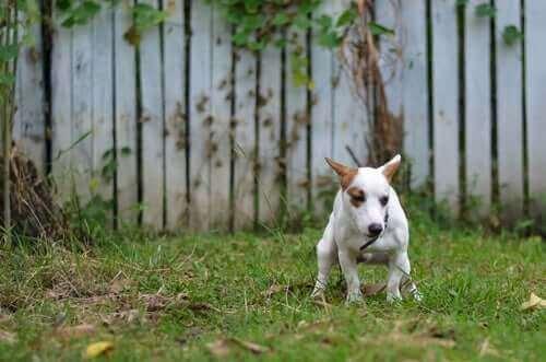 Köpek dışkılarının kontrol altına alınması çok önemli.