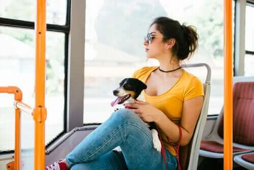 Toplu taşımada evcil hayvan taşıma