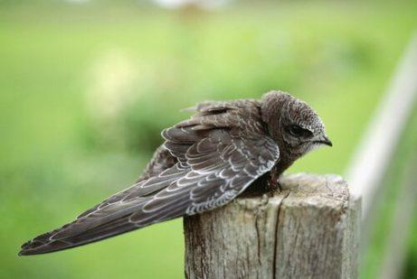 tek başına duran yavru ebebil kuşu
