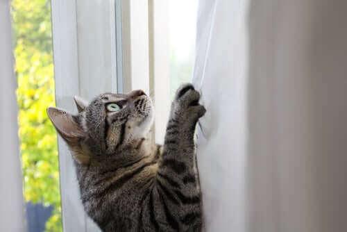 Kedileri Esnek ve Çevik Yapan Şey Nedir?