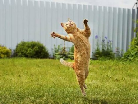 esnek ve çevik sarı kedi
