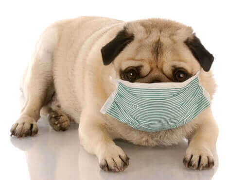 Kirli Ortamlar Ve Köpekler: Sağlıklarına Etkisi