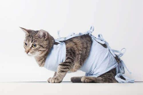 Kediler için hastane hayatı oldukça zor