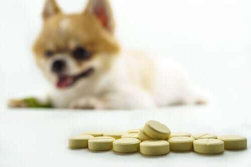 Köpeklerde Eklem Problemleri: Doğal Ve Kimyasal Takviyeler