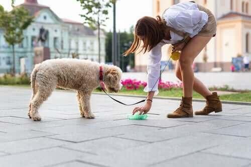 Köpeklerin dışkıları hiç bir şekilde öylece bırakılmamalı.
