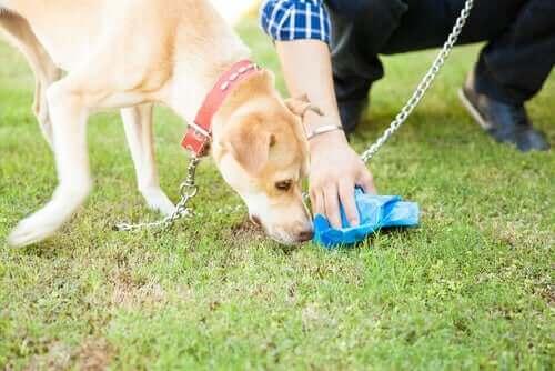 Hayvan sahiplerine çevre temizliği konusunda oldukça büyük görevler düşüyor.