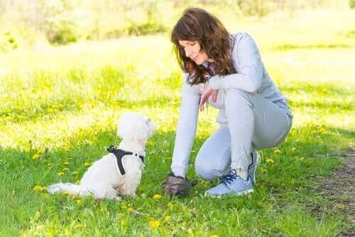 Köpeklerin Dışkıları Tanınmalarına Yardımcı Oluyor!