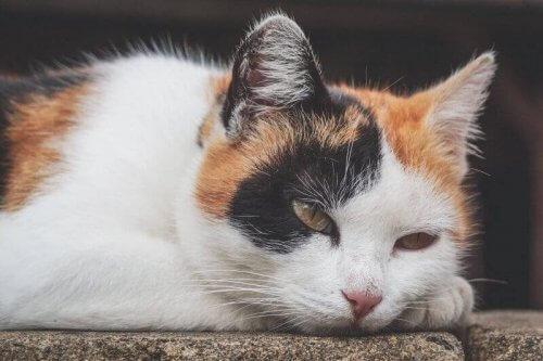 Kedilerde Anemi: Belirtileri, Nedenleri ve Tedavisi