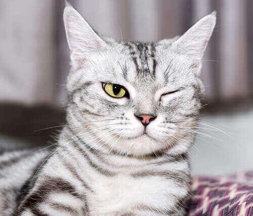 bir gözü kapalı kedi