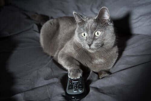 Kedilerde Olağandışı Gece Davranışları: 4 Neden
