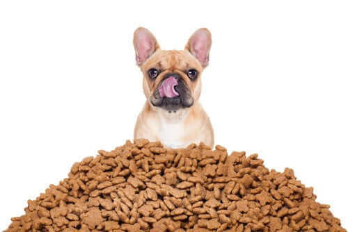 Köpeğiniz için Doğru Porsiyonu Nasıl Ayarlarsınız?