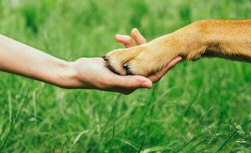 Bir Köpeğin Saygısını Kazanmak