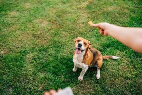 yemek bekleyen köpek