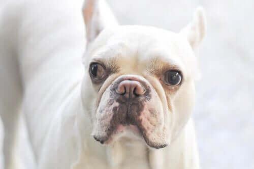 şaşı köpek