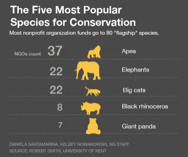 korunan popüler hayvanlar