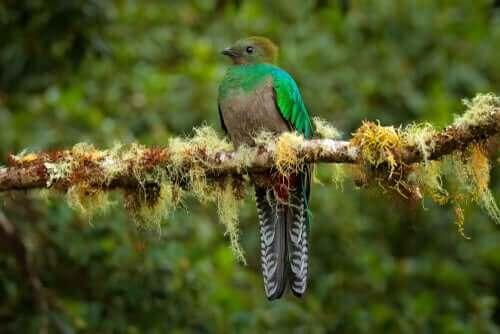 renkli küesal kuşu dal üstünde duruyor