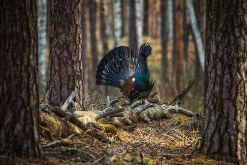 biyo-çeşitliliği korumak için önemli türler