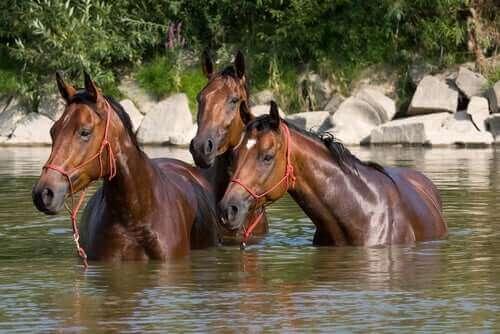 nehirde serinleyen atlar