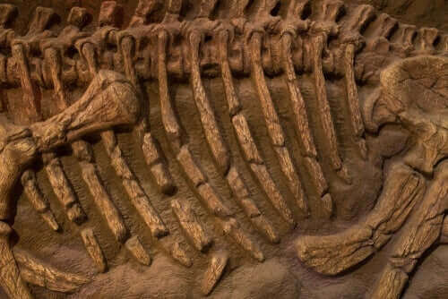 papagan fosili