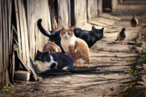 sokak kedilerinden hastalık kapmak mümkün