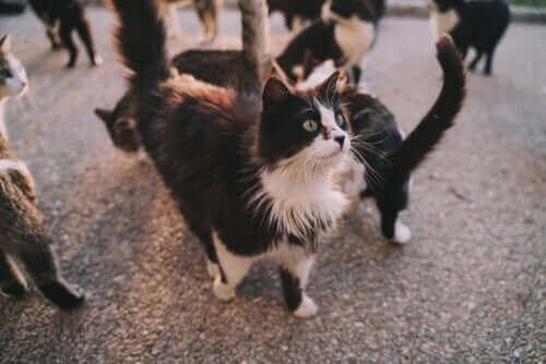 Kedi Hastalıkları: Hangileri Size Bulaşabilir?
