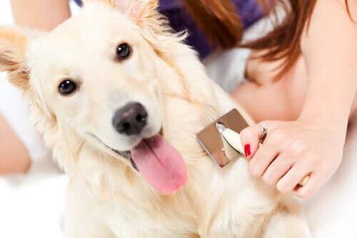 Köpeğinizi Düzenli Olarak Taramak
