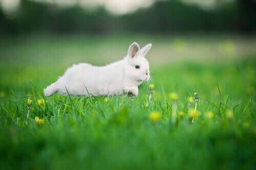 koşan beyaz bir tavşan