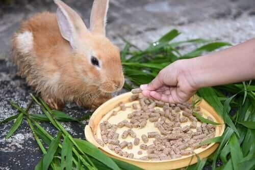 tavşan beslemek