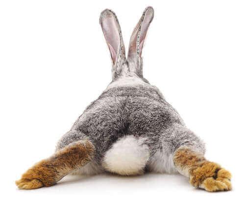 Tavşanlarda İshal Görülürse Ne Yapılmalı?