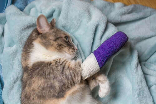 Kedilerde Sakatlık: Yaygın Nedenleri Ve Tedavisi