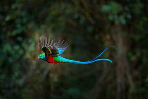 uçan renkli küesal kuşu