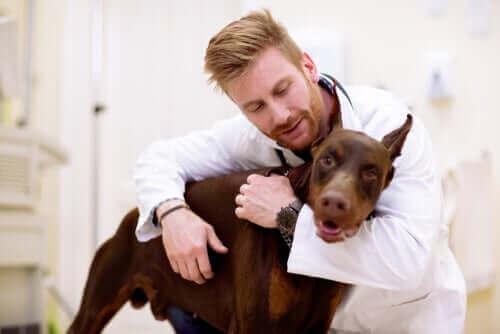 köpeğe sarılan doktor