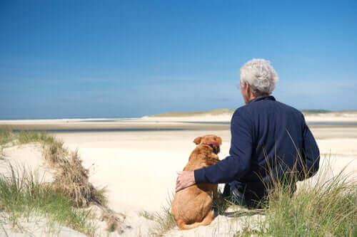 Yaşlı Köpeklerde Görülen 3 Sağlık Durumu