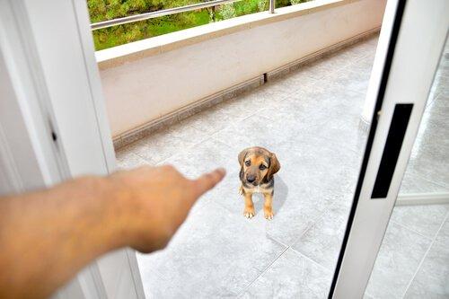 yavru köpeği suçlamak